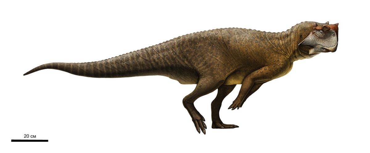 Динозавры России: пситтакозавр сибирский является одним из самых крупных представителей рода. Известно, что пситтакозавры жили на берегах водоёмов, были растительноядными и двуногоходящими или иногда передвигались на четырёх конечностях.