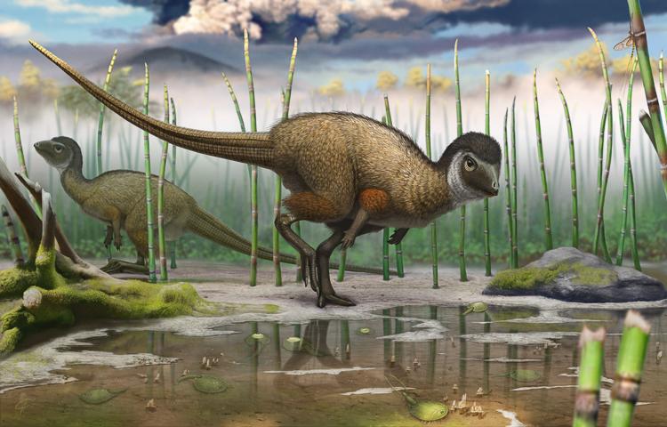 Динозавры России: Kulindadromeus уникален тем, что, будучи птицетазовым динозавром, имел перья, подобные птичьим. Покровы кулиндадромея состоят из трёх типов чешуй и трёх типов перьев. На каждой части тела свой тип покрова.
