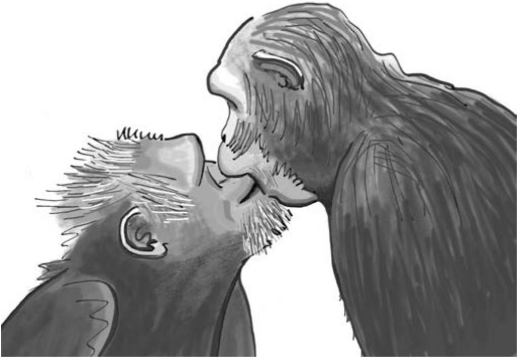 Жесты обезьян не только очень похожи на человеческие, но и используются в одинаковых ситуациях. Здесь изображена самка шимпанзе, целующая самца в знак примирения после ссоры между ними.